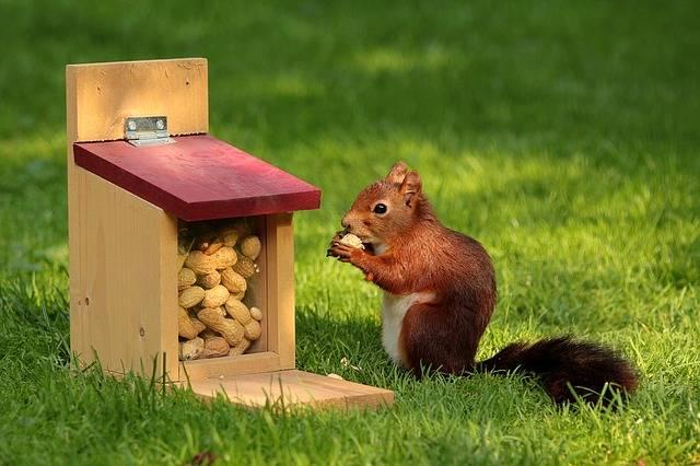 ピーナッツを頬張るリスの画像